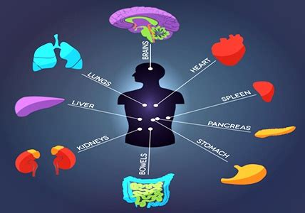 Which Organs Are Cleansed During A Detox by Major Organs Detoxification Wellness Health Advocate