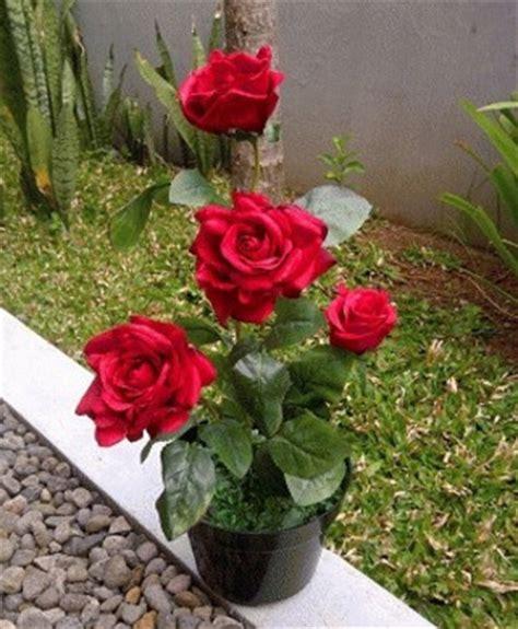 gambar menanam bunga mawar stek petani indonesia