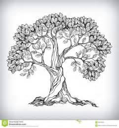 drawings of trees best 25 tree drawings ideas on trees drawing