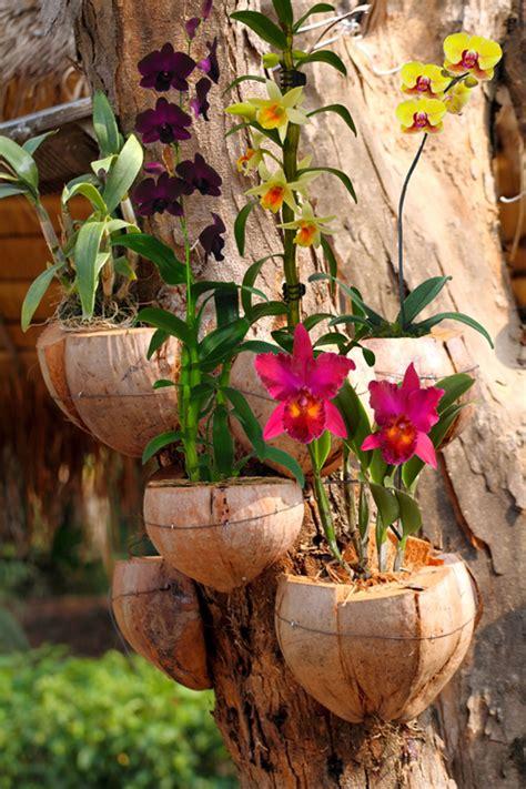 orchids in coconuts on tree orchids bettergro gardening go orqu 237 dea branca pinterest