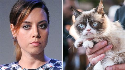 plaza to voice grumpy cat in new abc news