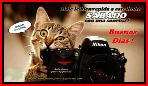 imagenes de feliz sabado con gatitos lindos gatitos con frases lindas de buenos dias en