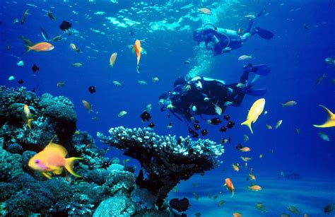 koh samui best shasa resort residences koh samui top 5 diving