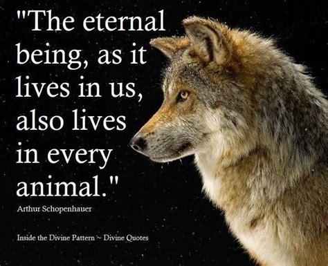1 1 Animal Quotes Beruang animal inspirational quotes images pet psychic inspirational animal and