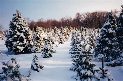 snowy christmas tree farm www imgkid com the image kid