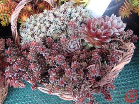 fioriere per davanzali il giardino in una fioriera 1a parte i consigli di base