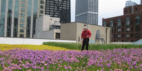 green roofs a useful solution to embellish our home and leak detection services green roof solutions