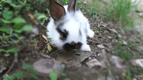 Tutu Kelinci who is that handsome rabbit the most handsome rabbit