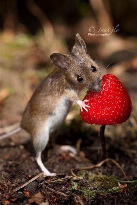 Mice Living In by 25 Unique Mouse Ideas On Mice How Much