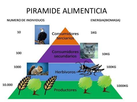 cadenas troficas en ecosistemas ecologia redes troficas