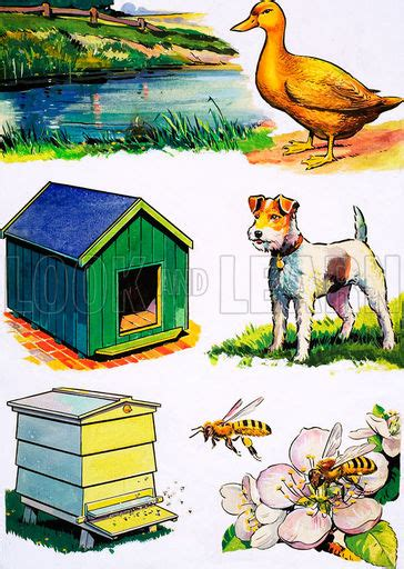 animals and their homes look and learn history picture