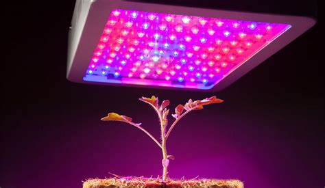spectrum led grow lights cheap best spectrum led grow lights of 2018 reviews the