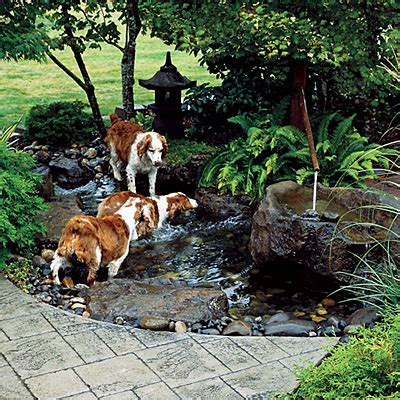 backyard landscaping ideas for dogs provide dogs access to water backyard ideas for dogs sunset