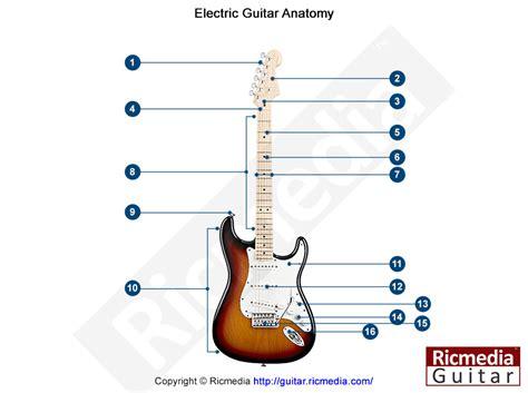 guitar anatomy lesson