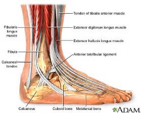 You can see from this the way the muscles on the shin and the related