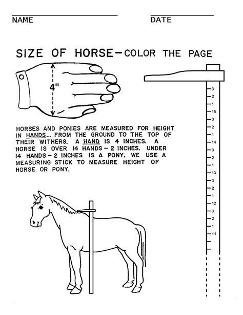 c worksheets horses