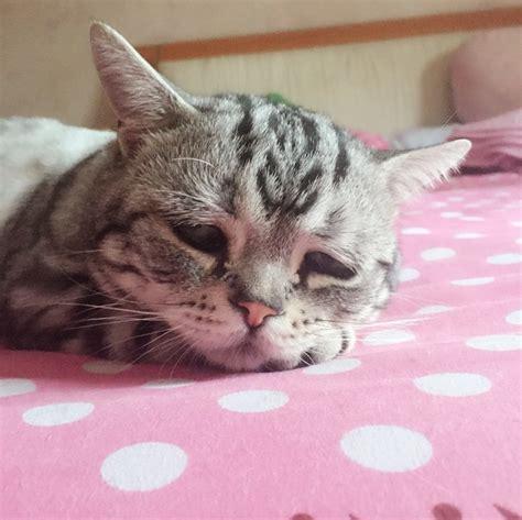 regarder oscar et le monde des chats regarder streaming vf en france luhu le chat 224 la bouille si triste que tout le monde