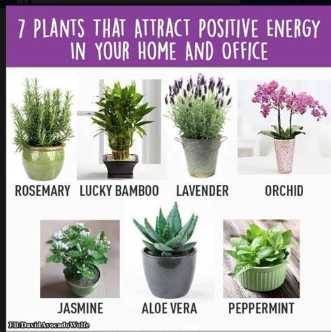 plants  attract positive energy powerful healing