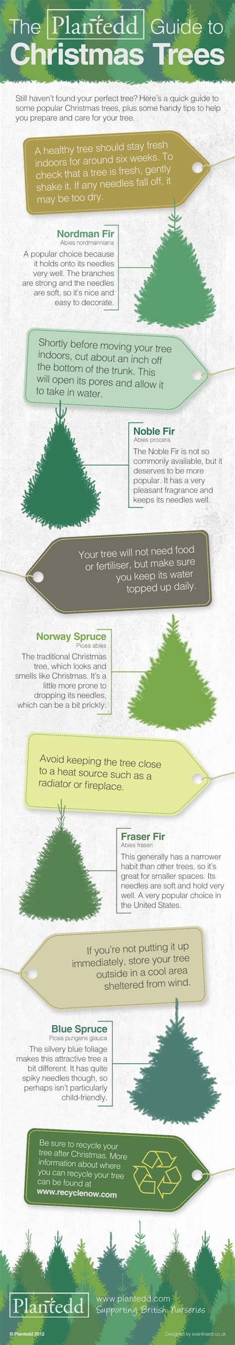 guide what you need to know about real christmas trees