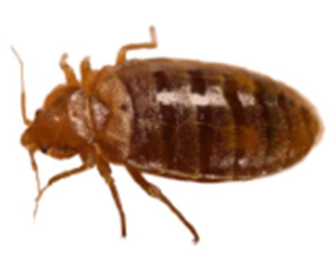 Bed Bugs Milwaukee by Milwaukee Pest Identification Guide Identify And Prevent