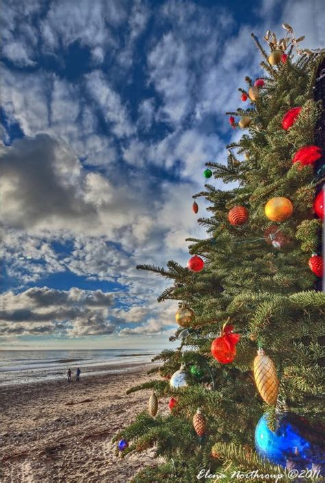 panoramio photo of christmas tree at crystal cove state