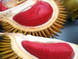 khasiat durian merah  kesehatan