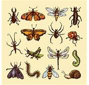 Insects Vectors Photos And PSD S  Free Download