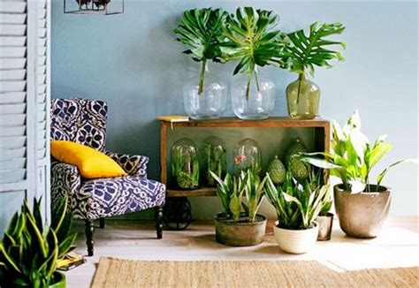 home decoration with plants home organizing tips having plants indoors www
