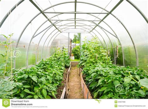 Plastic Covered Horticulture Greenhouse Royalty Free Stock