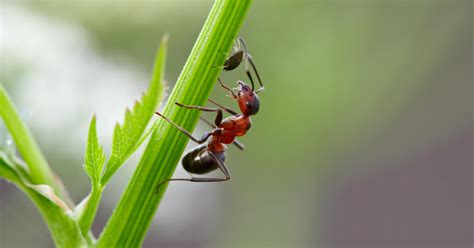 Gelbe Ameisen Im Garten 3820 by Ameisen Bek 228 Mpfen Mein Sch 246 Ner Garten