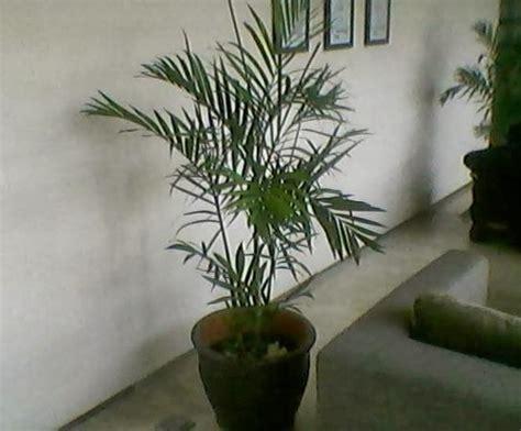 Pot Fleksibel Anggrek tanaman dalam pot bunga rumput buatan rumah dekorasi luar