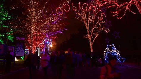 zoo lights national zoo lights up as bei bei recovers from bowel