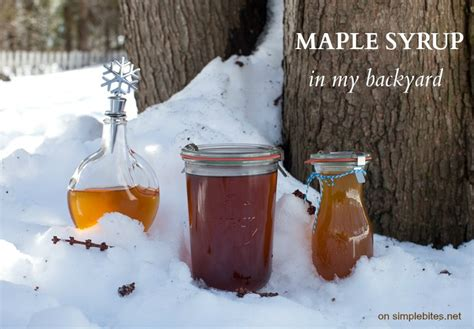 what we learned about maple syrup simple bites