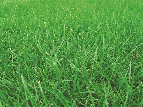 top 28 names of grass barnyard grass department of