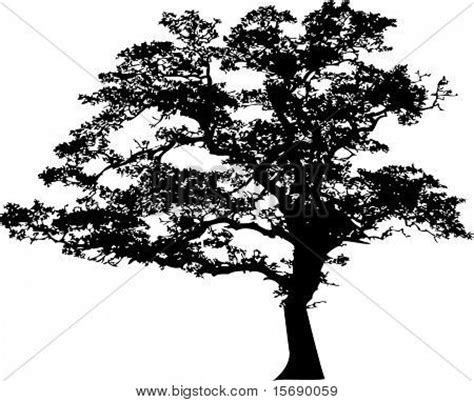 oak tree silhouette images stock photos amp illustrations
