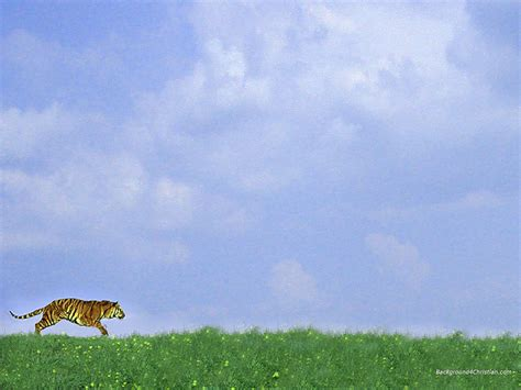 animal powerpoint templates runing tiger free ppt backgrounds for your powerpoint