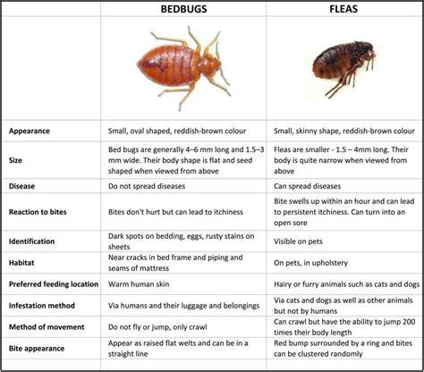 mild bed bug bites mild scabies bites tommycat info