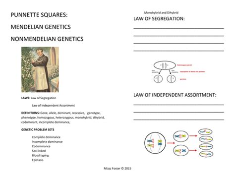 Non Mendelian Genetics Worksheet by Mendelian Genetics Worksheet Lesupercoin Printables