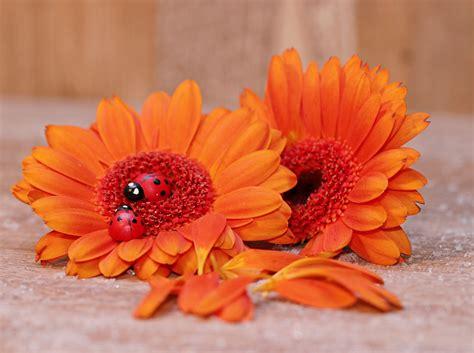 Kartu Ucapan Kecil Bunga Matahari gambar menanam daun bunga jeruk herba musim gugur kumbang kecil warna warni kuning