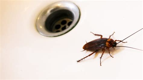 insetti in casa insetti in autunno come evitare entrino in casa www