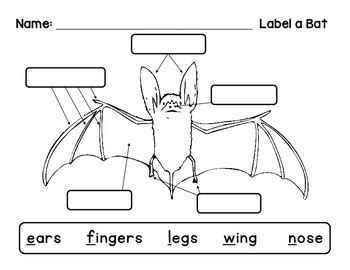 labelled diagram of a bat label a bat by livin in a by the river tpt