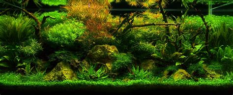 aquascaping materials aquatic eden aquascaping aquarium blog