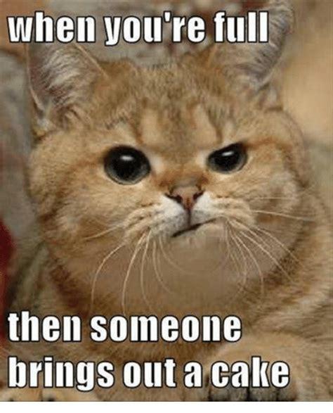 chocolate cake meme 25 best cake memes caking memes