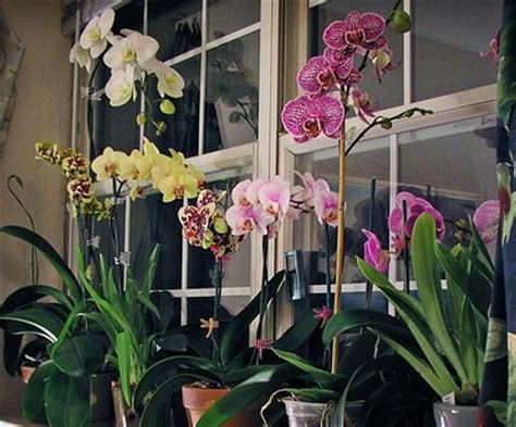 orchid care tag archive growing orchids indoors