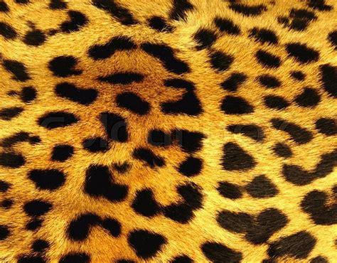Leopard Print Home Decor by Leopard Skin Texture Stock Photo Colourbox