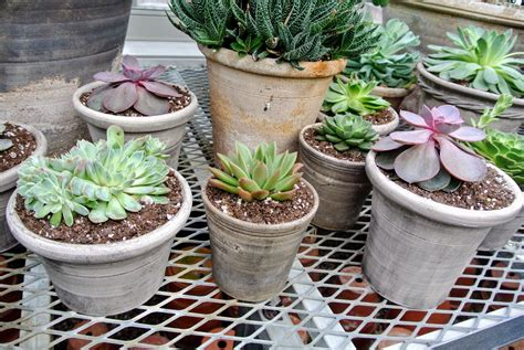 succulents that don t need light succulents that don t need light favorite things indoor