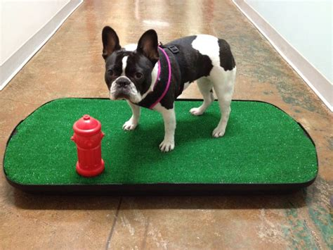indoor bathroom for dogs go doggy go indoor dog potty llc pet training 420 s