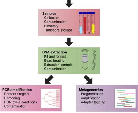sle preparation and dna extraction in the field for
