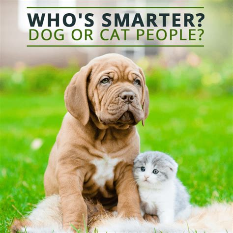 who is smarter cats or dogs who s smarter or cat
