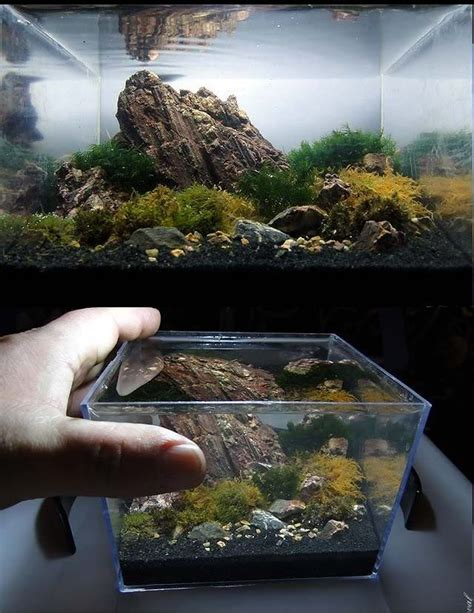 Pinset Aquascape aquarium oblivion aquaminiatura fishkeeping aquascaping thoughts and oblivion